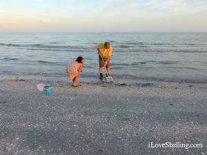lori clark shelling sanibel