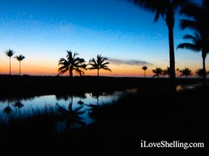 palm trees after sun down on captiva island florida