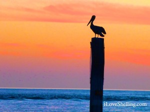 pelican on a  pole at Sunset Beach Captiva