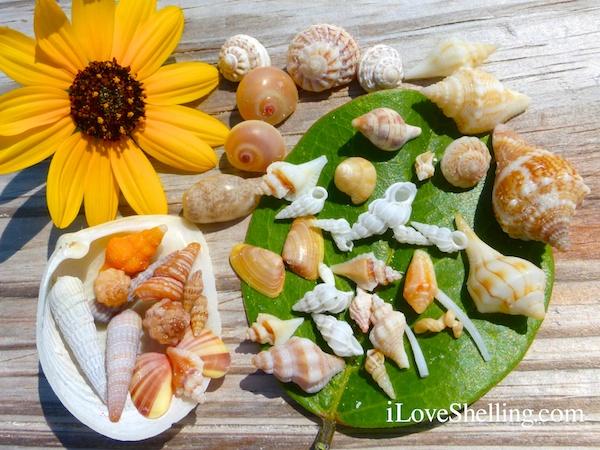 Minutes For Mini Shells