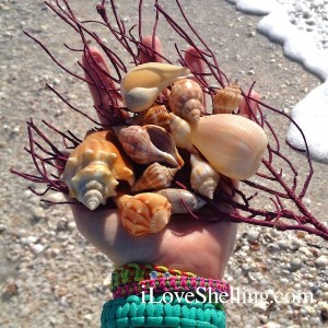 seashells and beach bling on sanibel island florida
