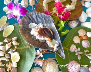 seashells display with sea grape leaves