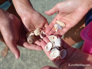 seashells with holes for crafts