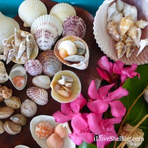 seashells with pink flowers