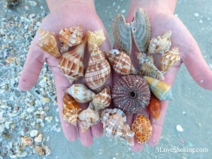 shells from anja and benjamin