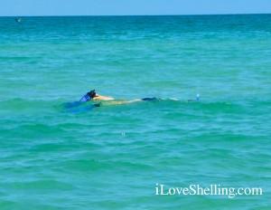 snorkeling lee county
