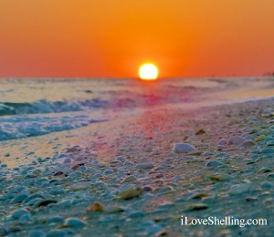 sunset over beach shells