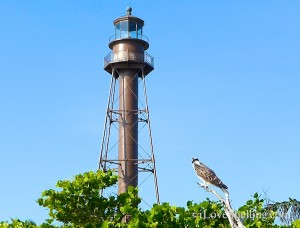 Sanibel lighthouse is watched by an osprey