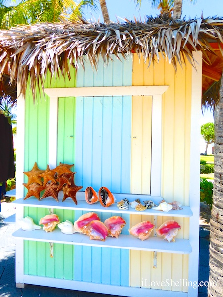 bahamas seashell shack