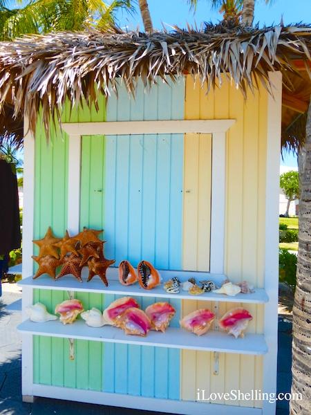 Gone Shelling – To The Bahamas