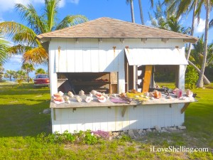 bahamas shell shack