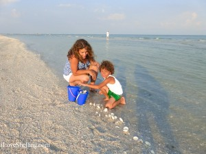 collecting dosinia seashells on Sanibel