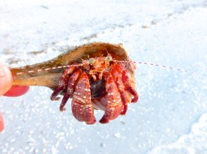 don't get crabby- I won't take your whelk