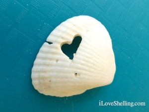 drilled heart in seashell