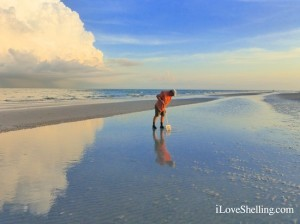 exploring low tide on Sanibel Island