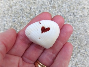 i heart this seashell