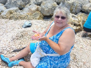 jean holycross finds beautiful crassatella shell captiva