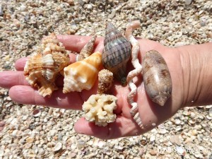 shells and coral found from Captiva sw florida