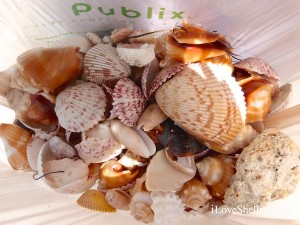 shells in a publix bag