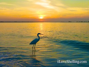 simple sanibel sunset