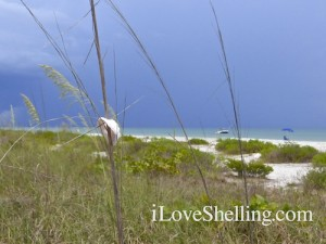 Sanibel shells decorate the beach