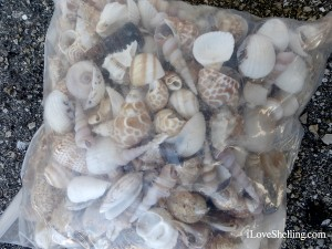 bag of foreign shells sold on Sanibel