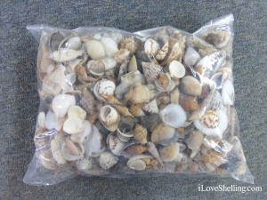 bag of shells for decoration