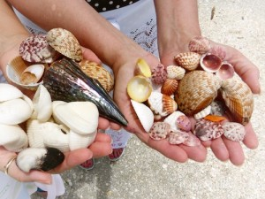 clam shells found on Sanibel