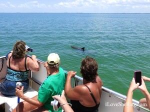 dolphin sight seeing captiva cruises