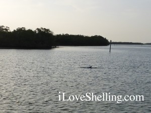 dolphin sight seeing on shelling excursion