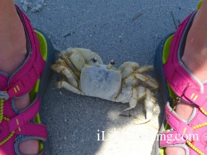 ghost crab hiding in shadow