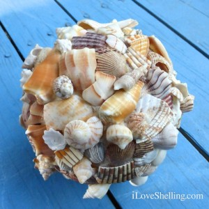 sea shell ball on blue