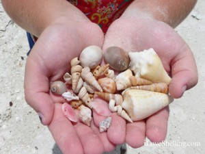 Sandy handful of seashells of southwest florida