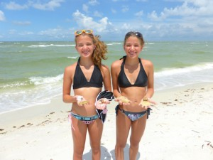 Visiting from kentucky, emily lily find sw florida shells