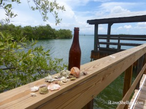 collecting cuban hatuey beer bottle and sea shells