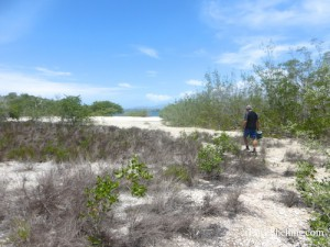 collecting shells in scrub brush at Guantanamo