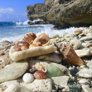 finding seashells and sea glass in Guantanamo Bay Cuba