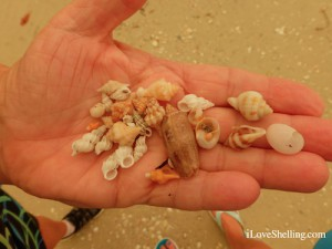 mini shell Holly found at lighthouse
