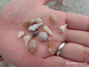 mini shells in a hand