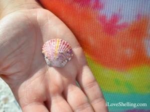 scallop shell tie die