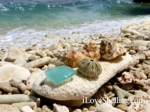 sea glass and shells on GTMO coral