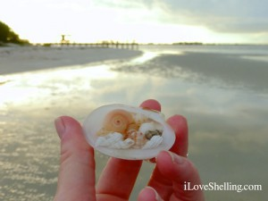 seashells by the Sanibel pier