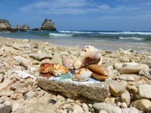 seashells guantanamo bay cuba chapman beach