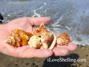 shells found on guantanamo beach