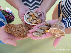 Find shells and beach bling on Sanibel Island