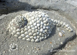 Kitty Cat seashell beach art