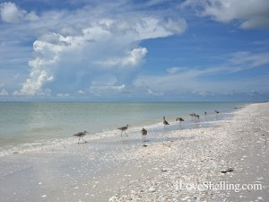 Sanibel Island beach with shells and birds