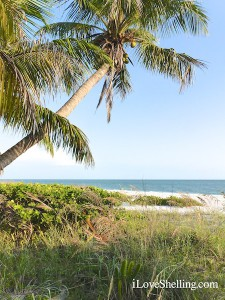 coconut palm tree on the beach