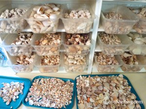 containers for seashells