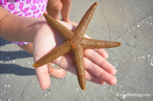 live starfish on the beach
